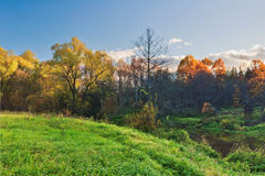 Sunny autumnal field Royalty Free Stock Photography