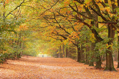 Sunny autumnlane with people Royalty Free Stock Photos