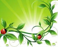 Sunny background Royalty Free Stock Image