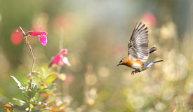 Sunny background with bird in flight Royalty Free Stock Photos