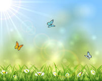 Sunny background with butterflies Stock Images