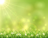 Sunny background with grass and flowers. Illustration Stock Photography