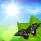 Sunny background with green grass and butterfly Stock Photography