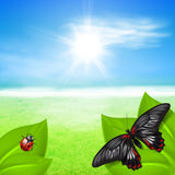 Sunny background with green grass and insects Stock Photos