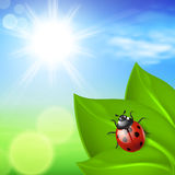 Sunny background with green grass and ladybird Royalty Free Stock Images