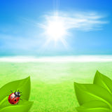 Sunny background with green grass and ladybird Stock Photo