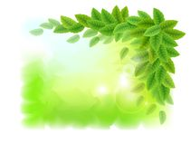 Sunny background with green leaves Royalty Free Stock Photography