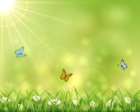 Sunny background with three butterflies Royalty Free Stock Photography