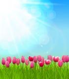 Sunny Background Vector Illustration naturel Images stock