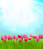 Sunny Background Vector Illustration naturel Photo libre de droits