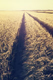 Sunny barley road Royalty Free Stock Images