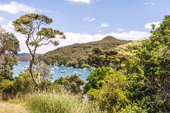 Sunny bay with resting yachts Royalty Free Stock Photos