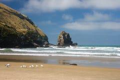Sunny beach. Remote sunny beach on the south-east coast of New Zealand. Catlins, South Island, New Zealand royalty free stock photos