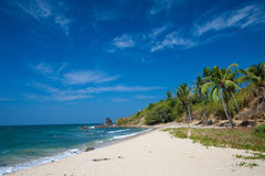 Sunny beach with coconut trees Royalty Free Stock Image