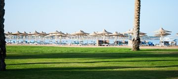 Sunny beach in egypt with umbrellas and green grass. Dark shadows on green grass near of sand beach stock image