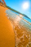 Sunny beach. With forest in the background Royalty Free Stock Images