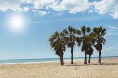 Sunny beach and palm tree Stock Photo