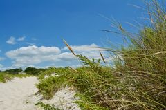 Sunny Beach with Sand Dunes and Blue Sky. Ocean. Ocean landscape with beach sea view, sand dune and grass, blue sky with clouds stock photos