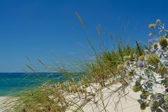 Sunny Beach with Sand Dunes and Blue Sky. Ocean. Ocean landscape with beach sea view, sand dune and grass, blue sky with clouds stock images