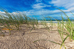Sunny beach with sand dunes, grass and blue sky, Australia Royalty Free Stock Images