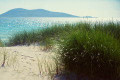 Sunny beach with sand dunes, tall grass and blue sky. Sunny beach with sand dunes, tall grass and blue sky Stock Image