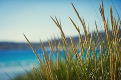 Sunny beach with sand dunes, tall grass and blue sky Stock Photography