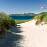 Sunny beach with sand dunes, tall grass and blue sky Stock Photos