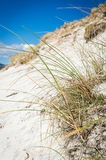 Sunny beach with sand dunes, tall grass and blue sky. Stock Images