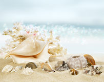 Sunny beach with shells Stock Photography