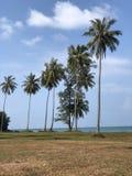 Coconut grass ocean beach sunny trees summer Stock Photos