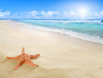 Sunny beach with starfish Stock Photo