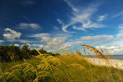 Sunny beach of Western Florida Stock Images
