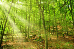 Sunny beam Royalty Free Stock Images