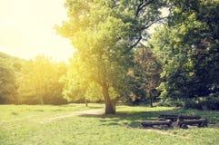 Sunny beam Royalty Free Stock Image