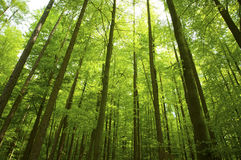 Sunny beams in forest Stock Images