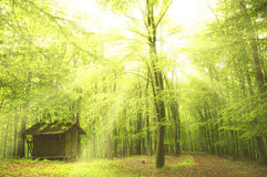Sunny beams in forest Stock Photos