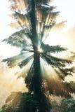 Sunny beams Royalty Free Stock Photography