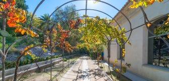 Sunny beautiful garden walkway, featuring metal vine growing frame overhead. Stock Photography