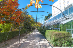 Sunny beautiful garden walkway, featuring metal vine growing frame overhead. Stock Photography