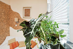 Sunny bedroom part with green plant leaf. On foreground royalty free stock photo