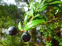 Sunny berries Stock Photo