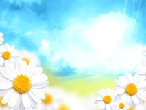 Sunny blue background with daisy flowers. Illustration Stock Image