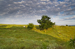 Sunny Blue Sky, Meadow and a hills Royalty Free Stock Photo