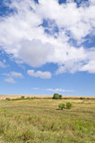 Sunny Blue Sky, Meadow and a tree Royalty Free Stock Images