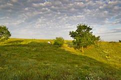 Sunny Blue Sky, pré et collines Photos stock