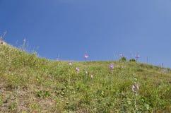 Sunny Blue Sky, pré et collines Photographie stock libre de droits