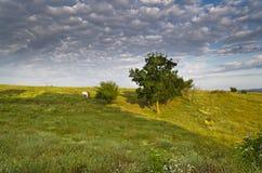 Sunny Blue Sky, prado e montes Foto de Stock Royalty Free