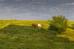 Sunny Blue Sky, prado e montes Imagem de Stock Royalty Free