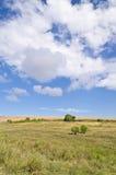 Sunny Blue Sky, prado e uma árvore Imagens de Stock Royalty Free