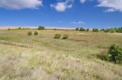 Sunny Blue Sky, prado e uma árvore Fotos de Stock
